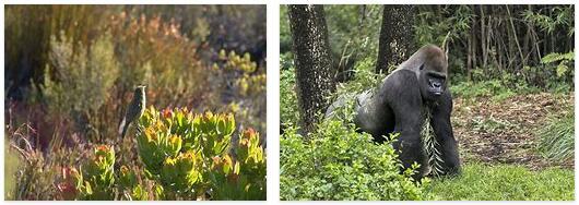 Africa Flora and Fauna